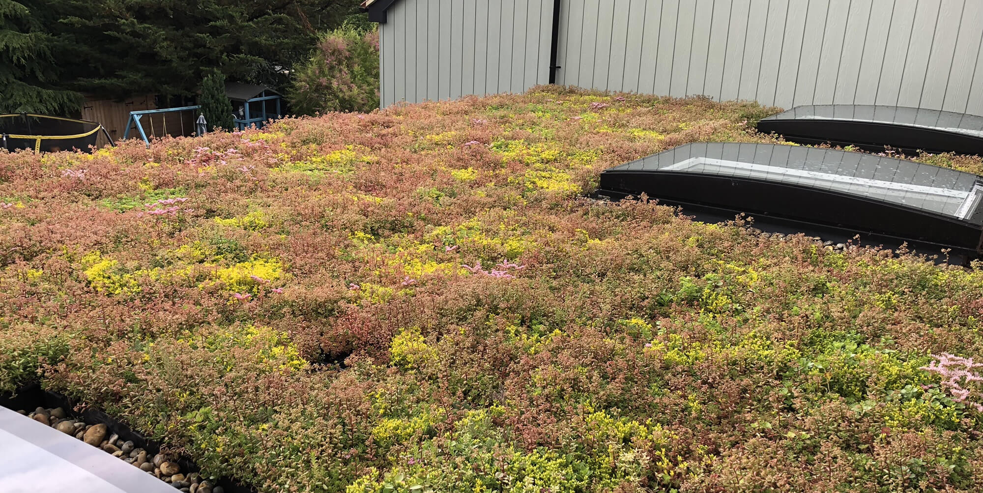 Green Roofs – A Beginners Guide